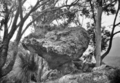 Queensland State Archives 417 Hunters Lookout Lamington National Park Beaudesert Shire September 1933.png