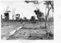 Queensland State Archives 5275 Cattle on Dillalah Bore Drain Charleville District January 1955.png