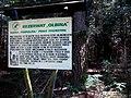 REZERWAT PRZYRODY Olbina 04 - panoramio.jpg