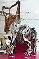 ROM 56 - Chasmosaurus (14359591775).jpg