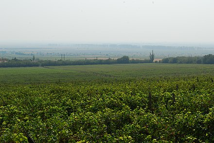 Vineyards in Romania; EU farms are supported by the Common Agricultural Policy, the largest budgetary expenditure. RO BZ Pietroasele vineyard.jpg