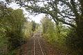 Rails in the woods near Castle Caereinion - geograph.org.uk - 1559925.jpg