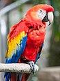 Rainforest Parrot (79341927).jpeg