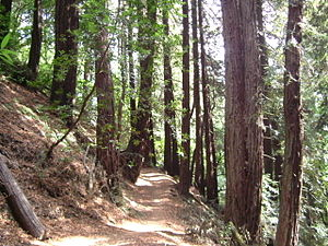 Redwood Regional Park - Redwood trees on the Golden Spike Trail
