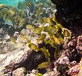 Reef Fish (6021863355).jpg
