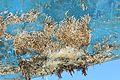 Restes de coquillages et d'algues sur la carène d'un voilier (10).JPG