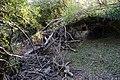 Restos de ramas arrastrados por el agua durante la inundación.jpg
