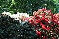 Rhododendronpark Bremen 20090513 232.JPG