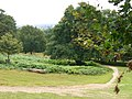 Richmond Park - geograph.org.uk - 507431.jpg