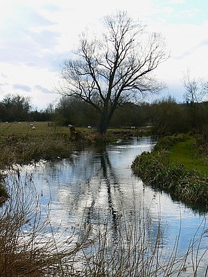 River Kennet - The Kennet near Axford.