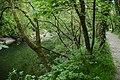River Teifi - geograph.org.uk - 427707.jpg