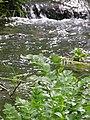 Rivière (Les Planches-près-Arbois) (4).jpg