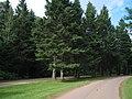 Road to Green Park Provincial Park (465591429).jpg