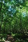 Rock Island Woods.jpg