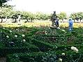 Rosengarten, Neue Residenz (The rose garden at the Neue Residenz) - geo.hlipp.de - 21160.jpg
