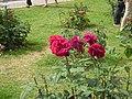 Roseto-di-roma-capitale---sito-di--il-cimitero-ebraico--dal-1645-fino-al-1934 9005796993 o 10.jpg