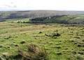 Rough grazing on Naze Hill - geograph.org.uk - 563250.jpg