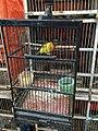 Ruby-cheeked sunbird in Jatinegara Market.jpg