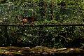Ruisseau de Bardes, Arifat - 08.jpg
