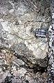 S of Mt Jackson brecciated QF gneiss in complex breccia 2.jpg