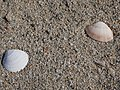 Sabbia spiaggia di Iscraios.jpg