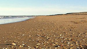 Seven Mile Beach (New South Wales) - Sand and shells on Seven Mile Beach NSW Australia