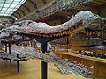 SarcosuchusSkull.jpg