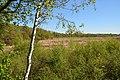 Schleswig-Holstein, Borgwedel, Naturschutzgebiet Esprehmer Moor NIK 1802.jpg