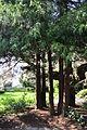 Seattle - Parsons Gardens 11.jpg