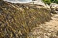 Seaweed-covered rocks at Half-Moon-Beach (14787461595).jpg