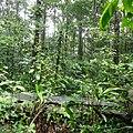 Secondary Forest (26077414688).jpg