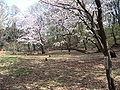 SengenyamaKoenApr2005-1.jpg