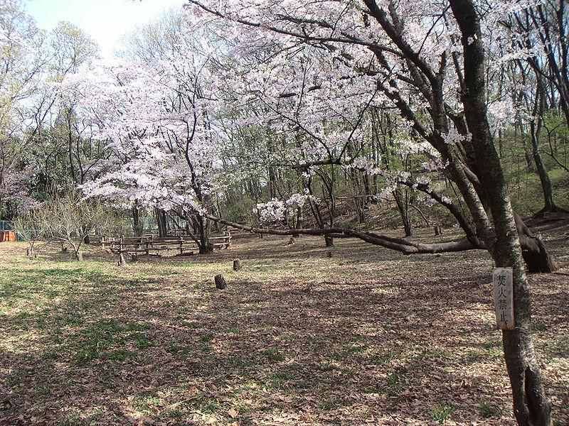 File:SengenyamaKoenApr2005-1.jpg