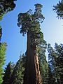 Sequoia National Park General Grant - Flickr - GregTheBusker (1).jpg