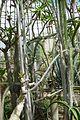 Serre des milieux arides-Jardin des plantes de Nantes (11).jpg