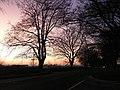Shapwick, dusk on the Blandford road - geograph.org.uk - 696310.jpg