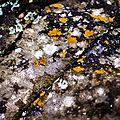 Shoreline Rocks (2685593772).jpg