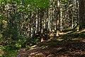 Slope into Gullmarsskogen ravine 1.jpg