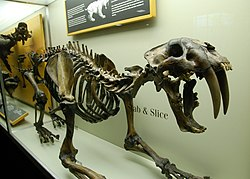 Smilodon californicus - Slice and stab.jpg