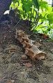Some bones near Grenoble 26-07-2020.jpg