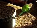 Soybeans (30182217494).jpg