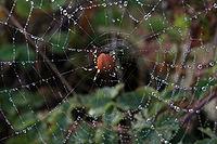 Spider web with fog droplets.jpg