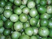 Umbu, fruto da Spondias tuberosa
