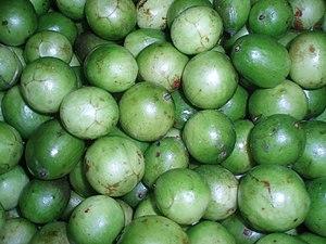 Spondias tuberosa - Image: Spondias tuberosa Umbu