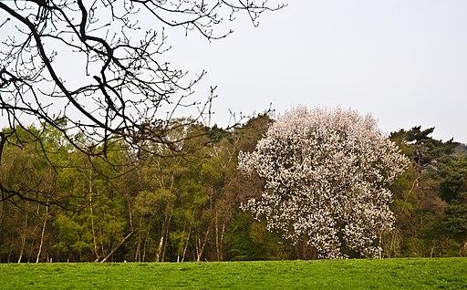 St. Leonard's Forest, West Sussex, England, 11 April 2011 - Flickr - PhillipC (1)
