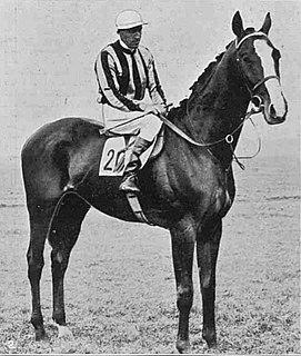St Louis (horse) Irish-bred Thoroughbred racehorse