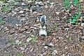 Standing squirrel - panoramio.jpg