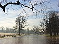 Standing water, Swallowfield Park - geograph.org.uk - 634186.jpg