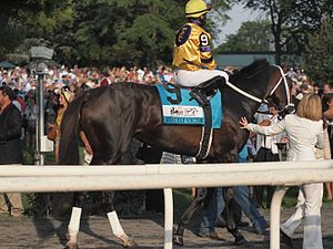 Stately Victor - Stately Victor at the Belmont Stakes in 2010