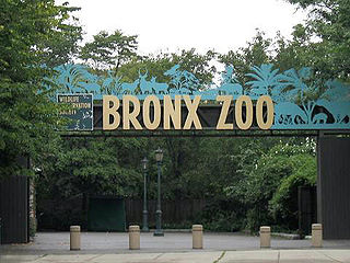 Animal theme park combination of a theme park and a zoological park